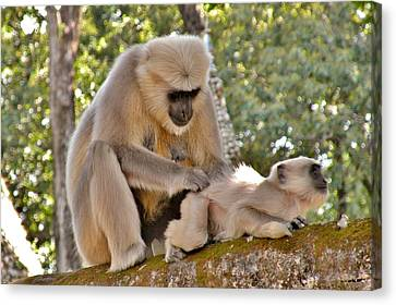 There Is Nothing Like A  Backscratch - Monkeys Rishikesh India Canvas Print