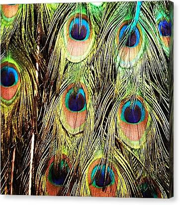 Peacock Feathers Canvas Print by Blenda Studio
