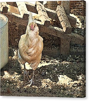 There's  A Chicken In The Hen House Canvas Print by Artist and Photographer Laura Wrede