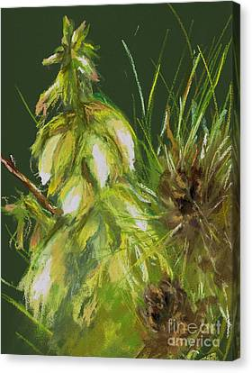 Theres A Yucca In My Yard Canvas Print by Frances Marino