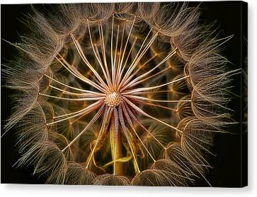 These Pods Light Up Just Dandy. Canvas Print