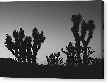 They Come Out At Night Canvas Print by Laurie Search