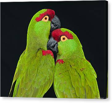 Canvas Print featuring the photograph Thick-billed Parrot Pair by Avian Resources