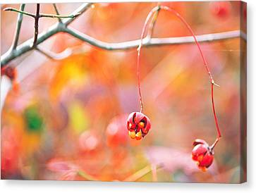 Thin Tree Branch With Bud Canvas Print by Panoramic Images
