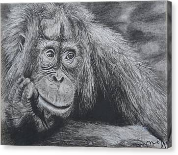 Thinking Orangutan Canvas Print by Megan Wood