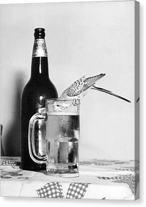 Glass Bottle Canvas Print - Thirsty Bird by Retro Images Archive