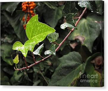 Canvas Print featuring the photograph Thirsty by Ellen Cotton