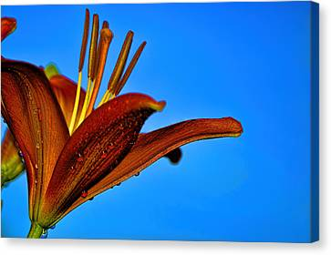 Thirsty Lily In Hdr Art  Canvas Print