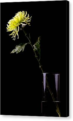 Canvas Print featuring the photograph Thirsty by Sennie Pierson