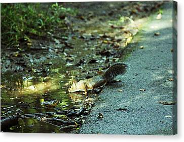 Canvas Print featuring the photograph Thirsty Squirrel by Lorna Rogers Photography