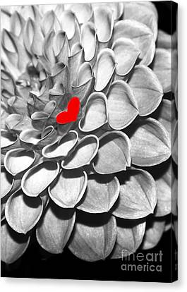 This Heart Is For You Canvas Print by Sabrina L Ryan