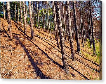 This Is A Steep Hill For Old Legs Canvas Print by Constantine Gregory
