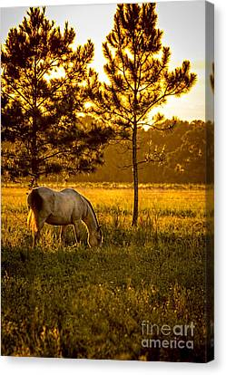 This Old Friend Canvas Print by Marvin Spates