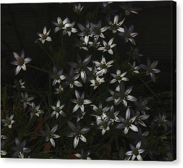 This Year's Bloom Canvas Print by John Feiser