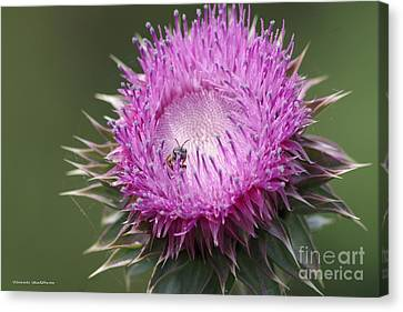Thistle And The Bee Canvas Print by Tannis  Baldwin