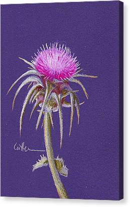 Thistle Canvas Print by Diane Cutter