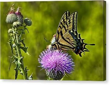 Canvas Print featuring the photograph Thistle Do Just Fine by Gary Holmes