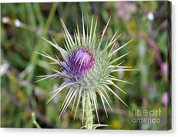 Thistle Flower Canvas Print by George Atsametakis
