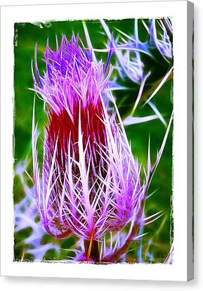 Thistle Canvas Print by Judi Bagwell