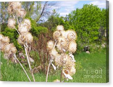 Thistle Me This Canvas Print