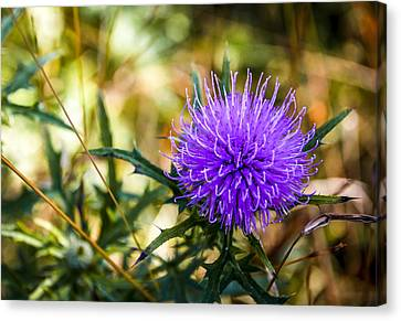 Canvas Print featuring the photograph Thistle by Phil Abrams