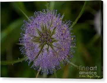 Mary King Canvas Print - Thistle Pop by Mary  King
