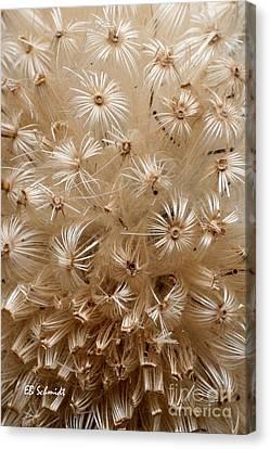 Thistle Seed Head Canvas Print by E B Schmidt