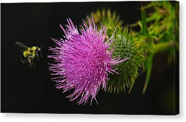 Thistle While You Work Canvas Print