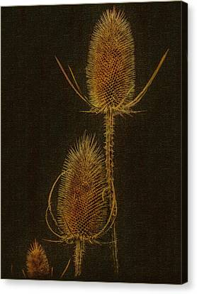 Canvas Print featuring the photograph Thistles by Hanny Heim