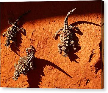 Thorny Devils Canvas Print