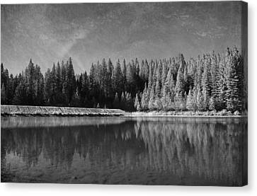 White Pines Canvas Print - Those Days Are Gone by Laurie Search