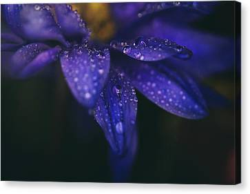 Water Drops Canvas Print - Those Tears You Cry by Laurie Search