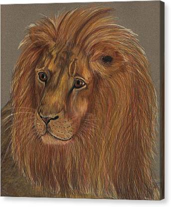 Canvas Print featuring the drawing Thoughtful Lion 2 by Stephanie Grant
