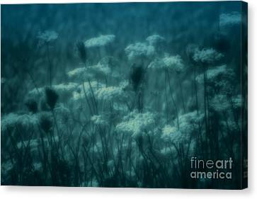 Thoughts Of Yesteryear  Canvas Print