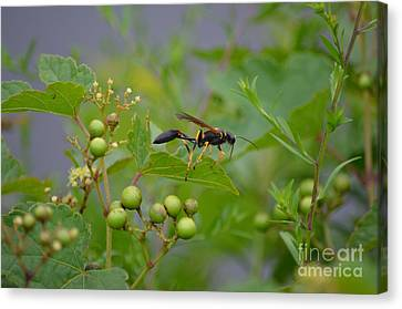 Canvas Print featuring the photograph Thread-waist Wasp by James Petersen