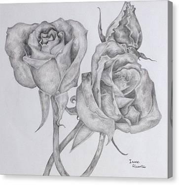 Three American Beaties  Canvas Print by Isaac Alcantar