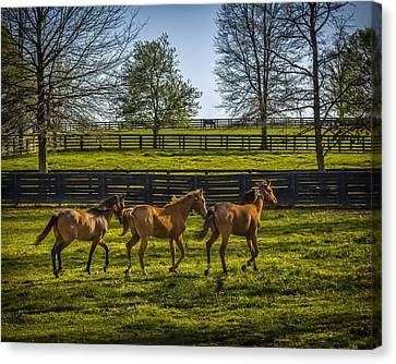 Three Amigos Canvas Print