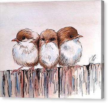 Three Baby Fairy Wrens Canvas Print