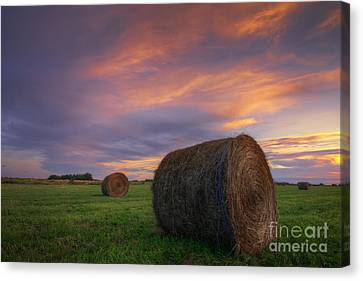 Three Bales Canvas Print