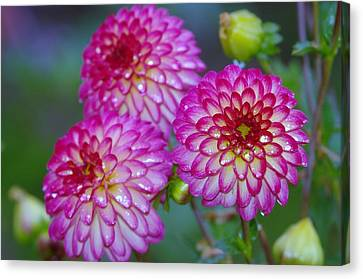 Three Beauties Canvas Print