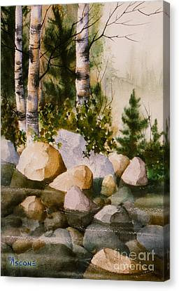 Three Birch By Rocky Stream Canvas Print by Teresa Ascone