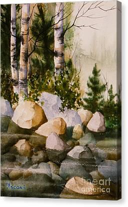 Three Birch By Rocky Stream Canvas Print