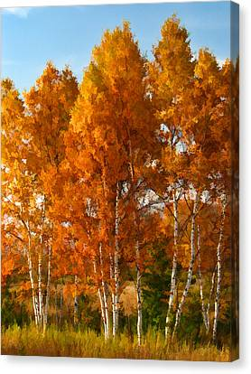 Three Birches Canvas Print
