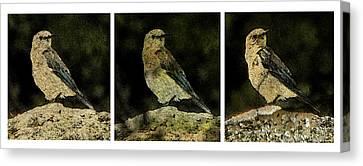 Three Birds Canvas Print by John Goyer