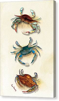 Three Blue Crabs Canvas Print by Anne Beverley-Stamps