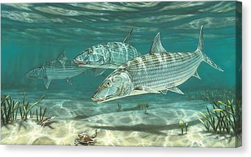 Three Bonefish And Crabs Canvas Print by Don  Ray