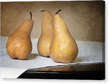 Three Bosc Pears - Traditional Still Life Canvas Print by Nikolyn McDonald