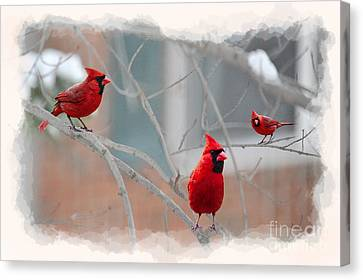 Three Cardinals In A Tree Canvas Print by Dan Friend