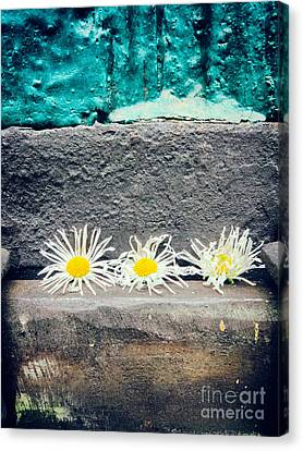 Canvas Print featuring the photograph Three Daisies Stuck In A Door by Silvia Ganora