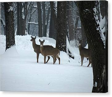 Canvas Print featuring the photograph Three Deer In Park by Eric Switzer